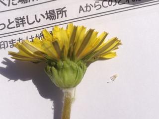 yosida_kusi1504270089.jpg